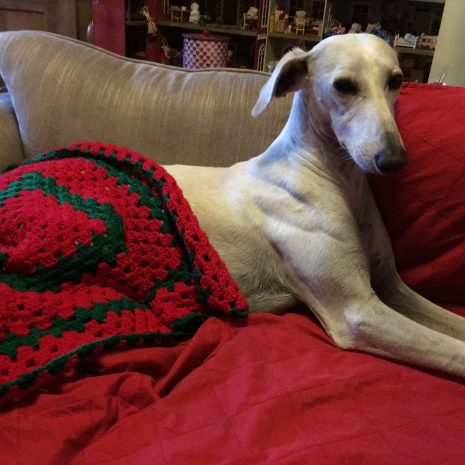Alfie-Christmas-blanket-from-Cosmos-party-supplies